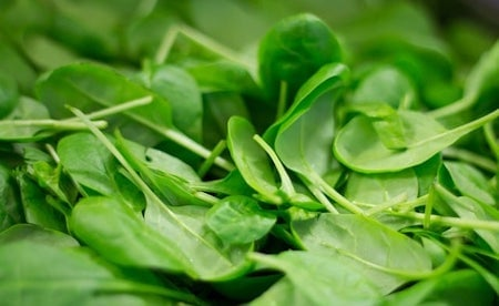 green baby spinach leaves